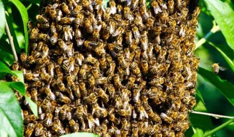 Muere tras chocar con una casa abandonada llena de abejas