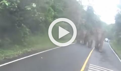 Vídeo: una manada de elefantes persigue a un motorista