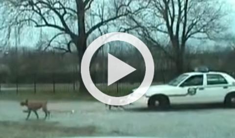 Un perro destrroza el paragolpes de un coche de Policía