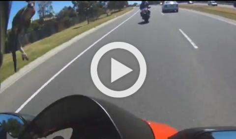 Vídeo: en Australia hay que tener cuidado con los canguros