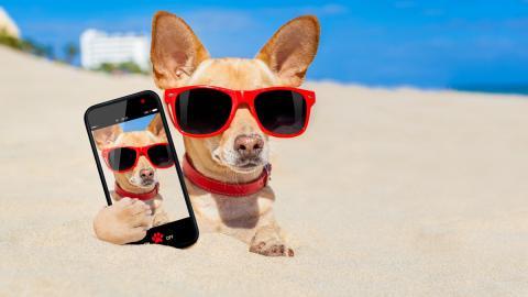 ocho aplicaciones mascotas