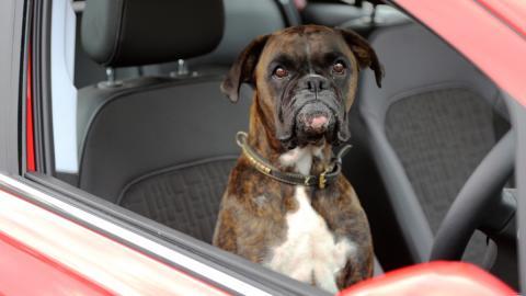 perro aparcar opel corsa