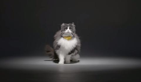catterbox collar traduce maullidos gatos