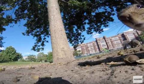Una ardilla 'roba' una GoPro y graba el mejor vídeo del año