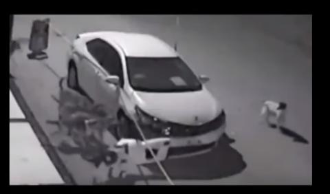 En vídeo: una manada de perros salvajes destroza un coche