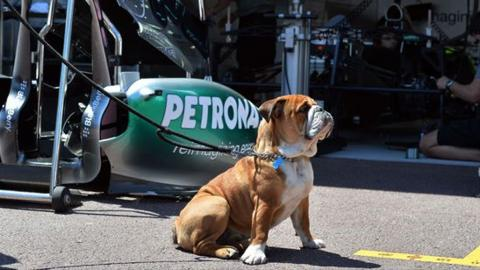 Roscoe: el jefe del box de Mercedes