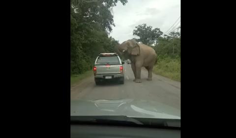 Elefante ataca coche