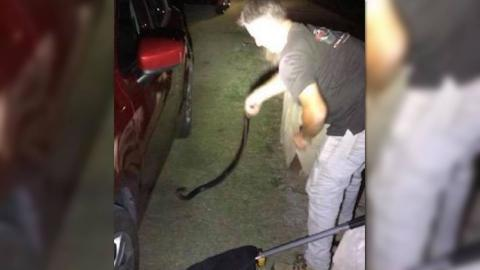 Encuentra serpiente en su coche