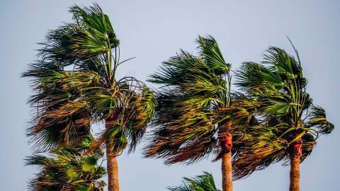 palmeras sol aire paraiso
