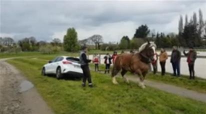 Un caballo demuestra su fuerza sacando un coche de una zanja