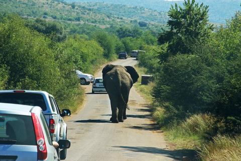 Efecto Elefante