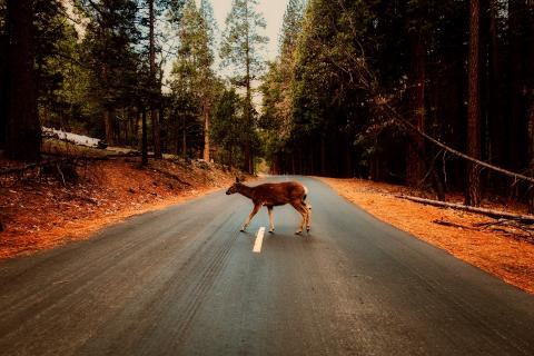 Animal en la carretera
