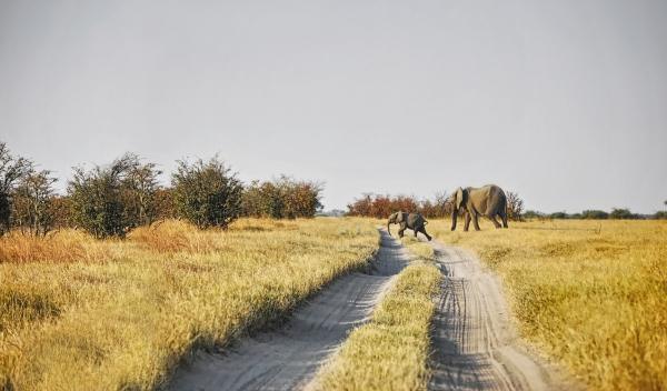 reserva Savuti