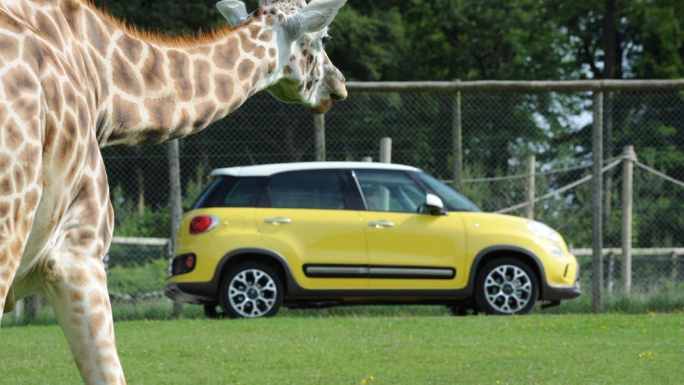 cinco coches estética SUV Fiat 500L Trekking zaga