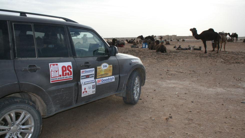 Explorers aventura 2015 camellos merzouga