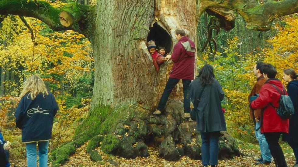 Bosque Reinhardswald