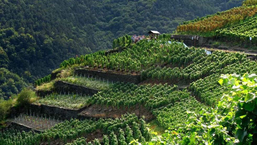 Maikammer: el viñedo de Heiligenberg