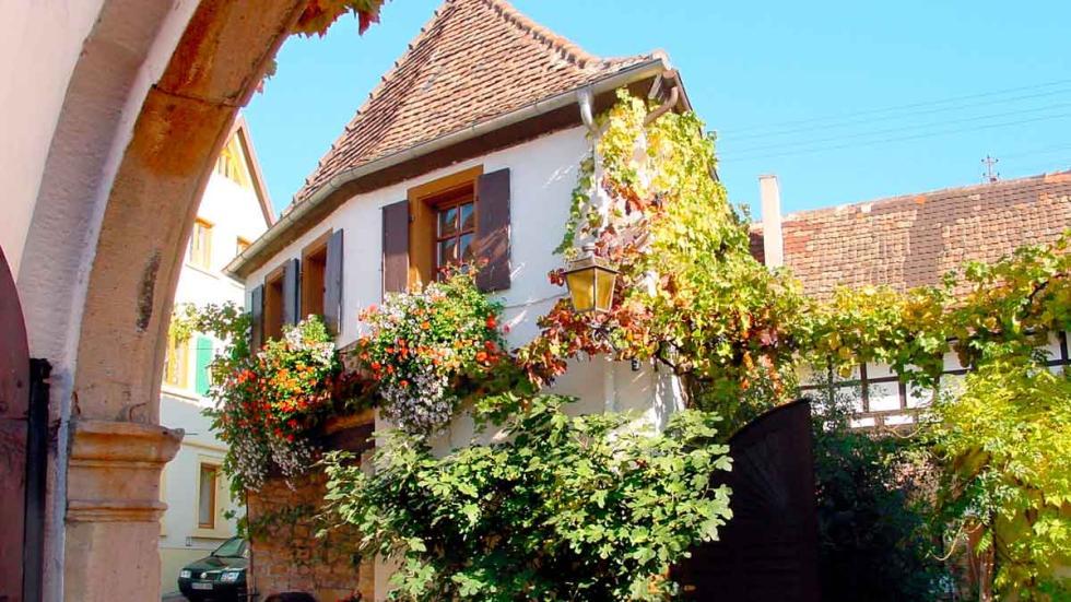 Neustadt-Diedesfeld: una parra sube por la pared de una casa.