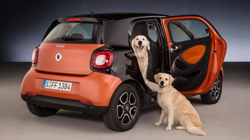 Smart ForFour para perros 1