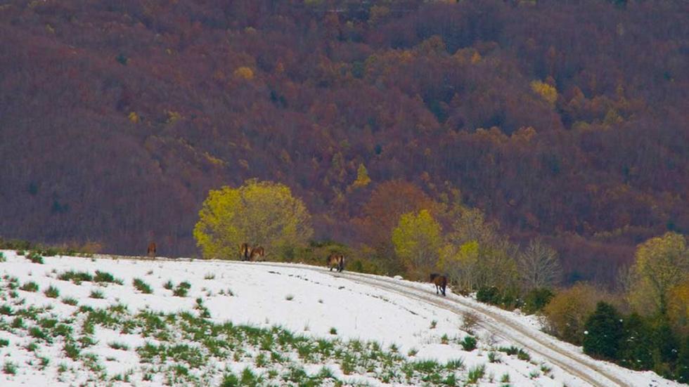 La Selva de Irati, en Navarra