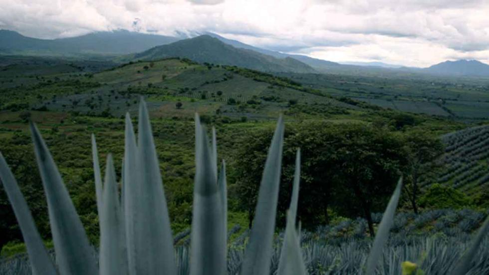 Ruta del Tequila, en México.