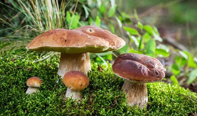 7 planes en la naturaleza especiales en otoño
