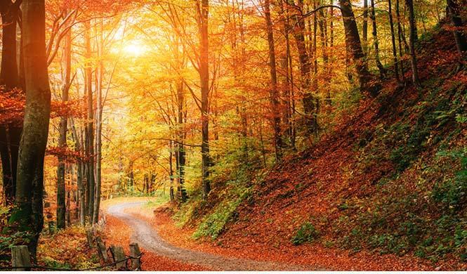 7 planes en la naturaleza especiales en otoño 2