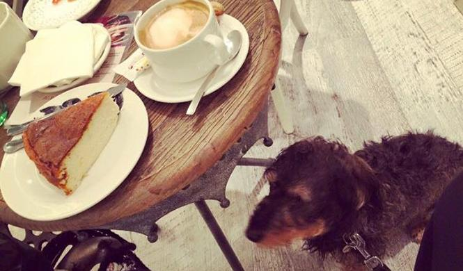 mejores restaurantes dog friendly en SrPerro 5