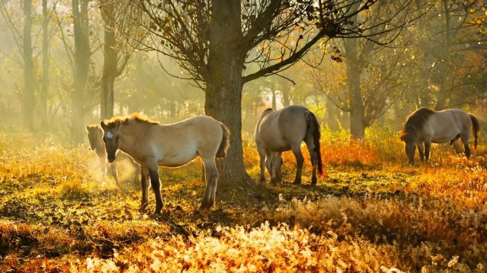 Parque Natural de Barnim