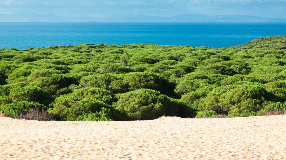 playa tarifa andalucia