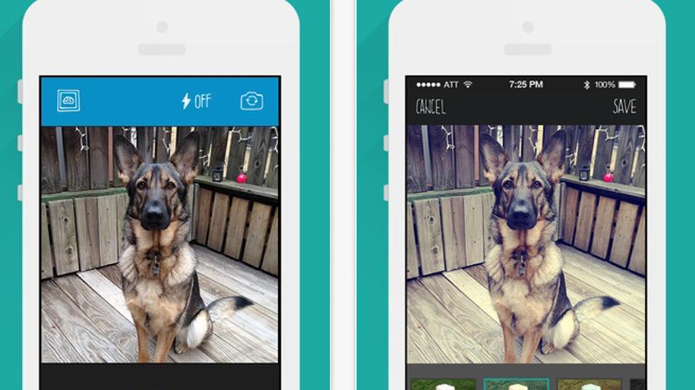 app barkcam perro guapo