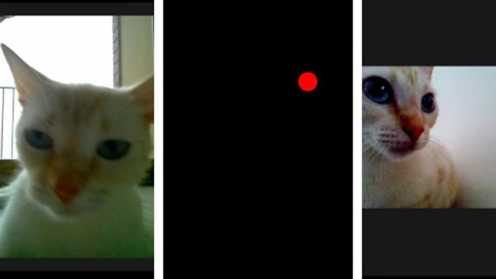app snap cat