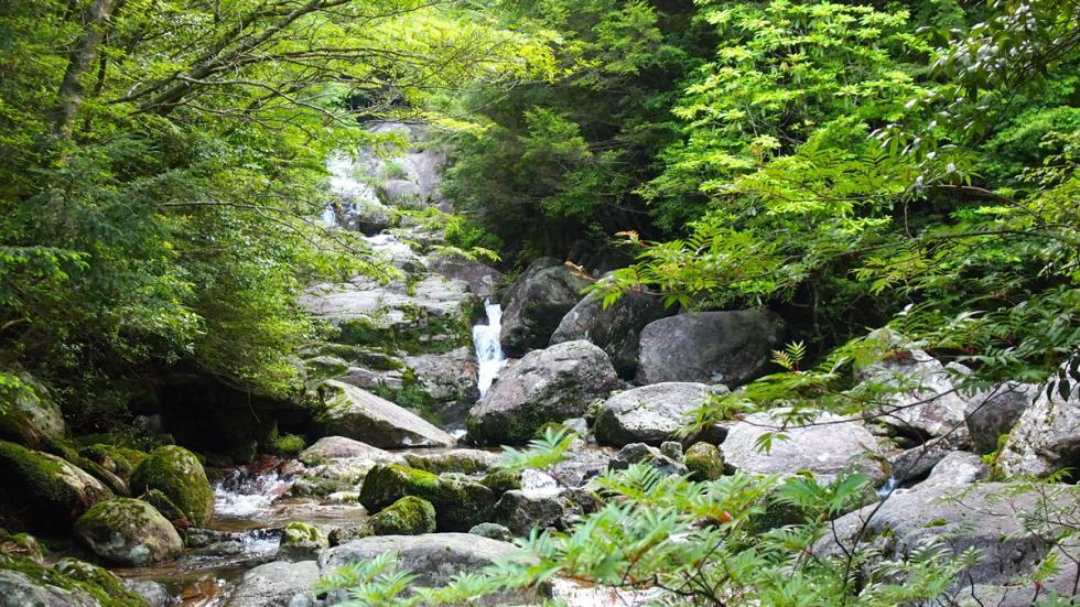 selva isla yakushima japon