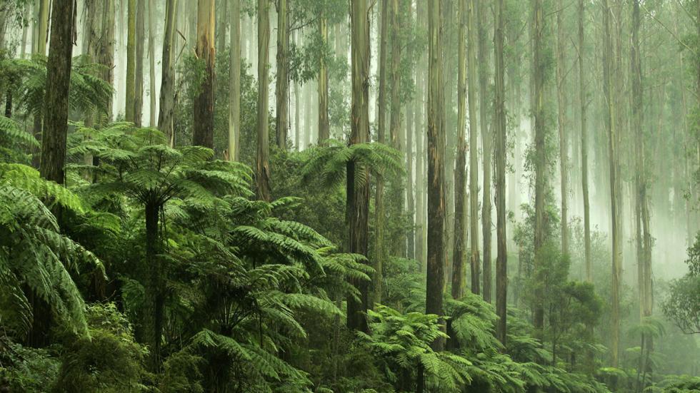 selva australia