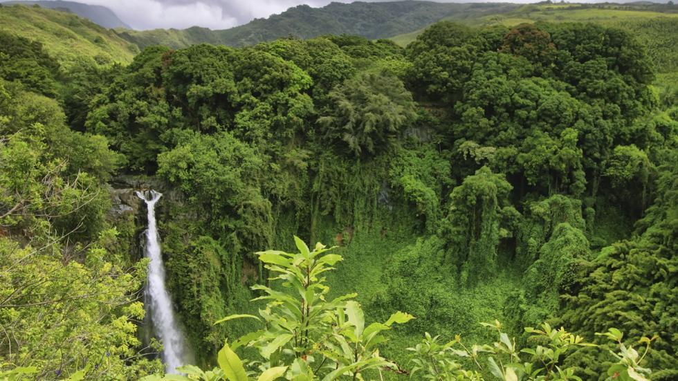 selvas hawai estados unidos