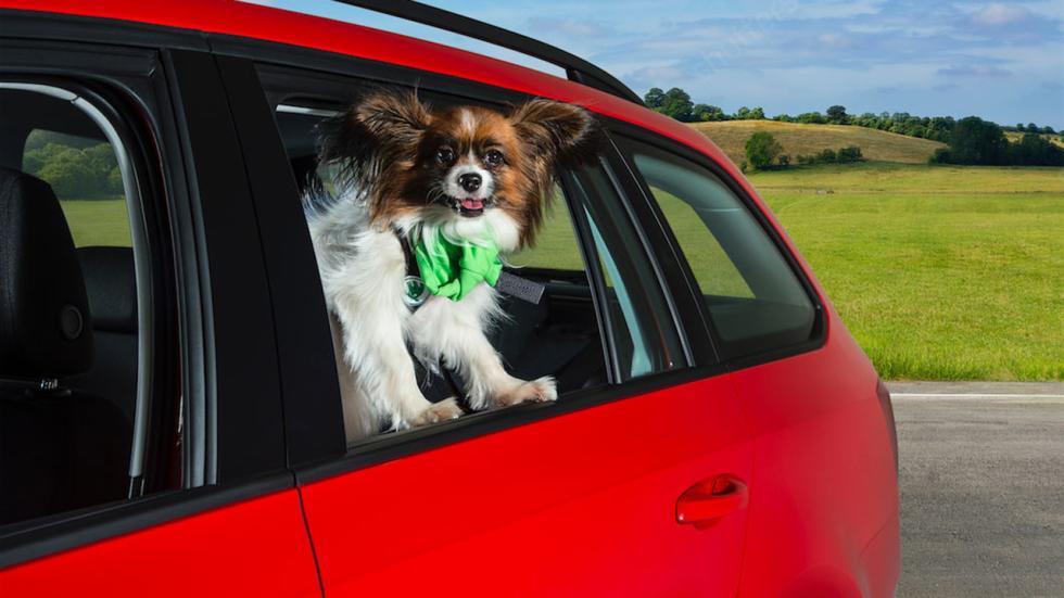 Perros en el coche