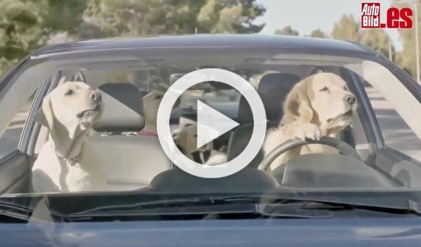 Los 10 vídeos de coches más virales en Estados Unidos
