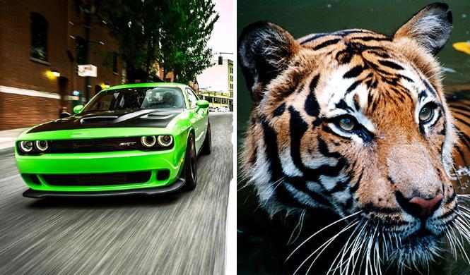 Cinco animales que hacen ruidos de coche