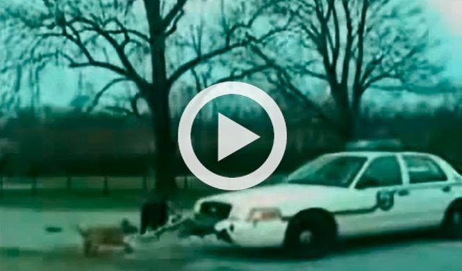 Vídeo: un pitbull ataca un coche patrulla