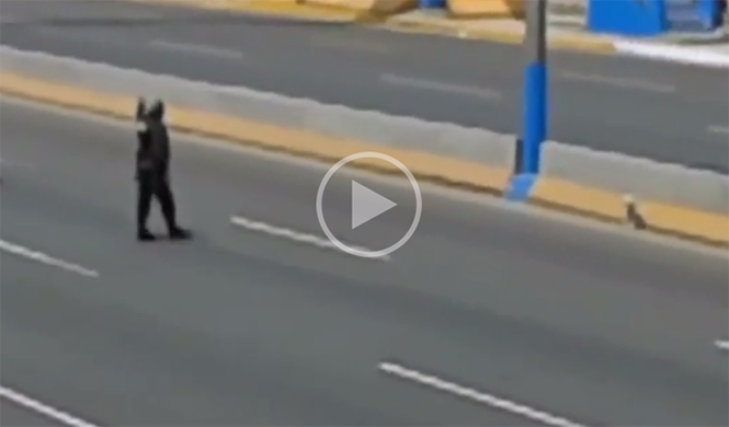 Vídeo: un policía para el tráfico para ayudar a un perro