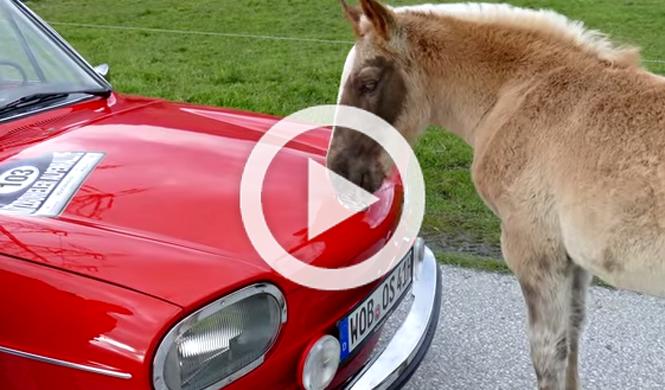 El coche que susurraba a los caballos