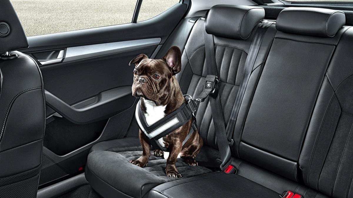 El cinturón de seguridad para perros