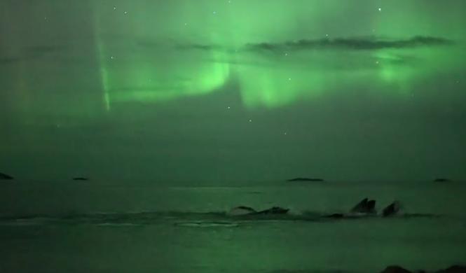 aurora boreal ballenas halloween