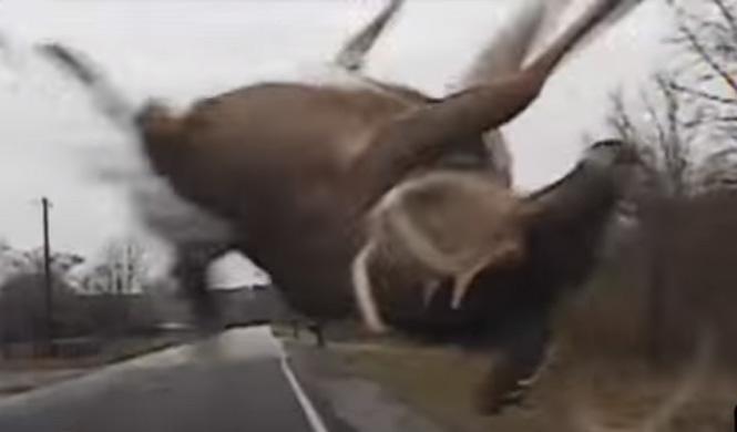 Lo que se siente al atropellar un ciervo con el coche