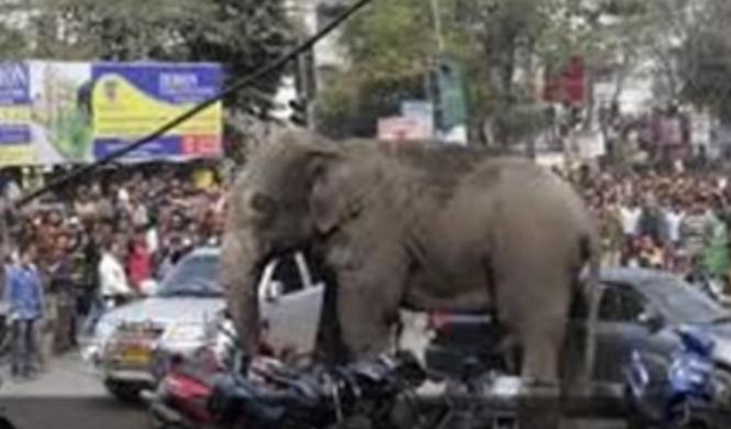 Un elefante despechado aplasta 15 coches en China