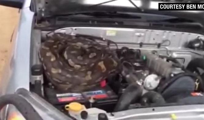 Abrió la tapa del motor y encontró esto...