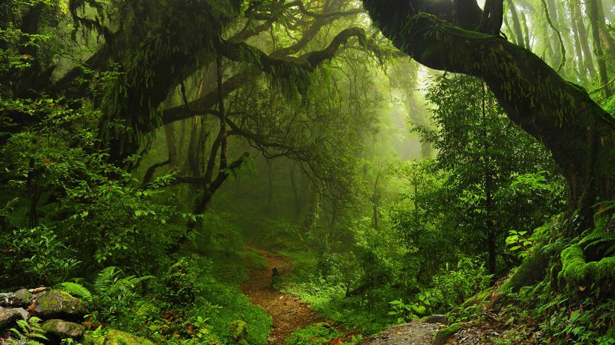 selva amazonica extensa planeta