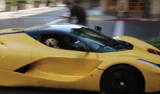 El perro con más suerte del mundo se pasea en un LaFerrari