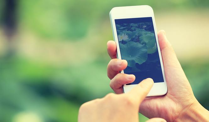 Llega a España el Plan Renove para móviles