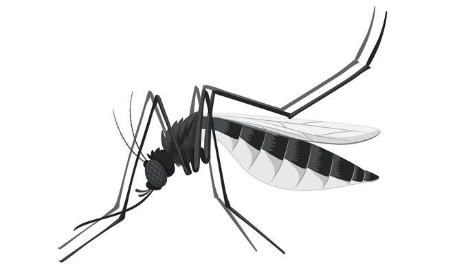 7 remedios falsos contra el Zika que se han hecho virales